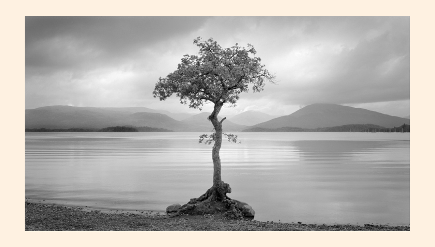 Loch and Tree